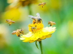 Pollinator Party on June 21st