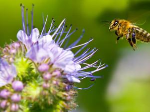 Urban Ag Talk: Native Plants and Pollinators