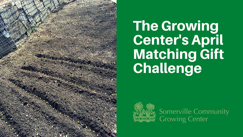 The Growing Center's April Matching Gift Challenge: image of seeds being planted at the site.