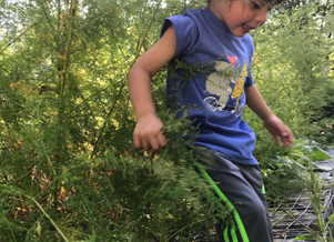 Nature Garden Playschool at the Growing Center: Wonder, Joy, and Changes