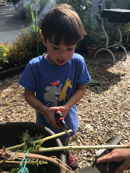 A child cuts a plant stalk in the garden.