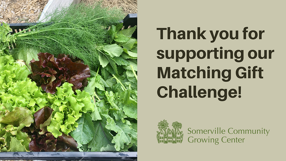 Thank you for supporting our Matching Gift Challenge (with image of harvested vegetables from the Growing Center)