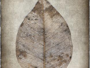 Leaf-Skeleton.jpg
