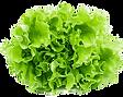 lettuce_edited.png