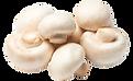 Mushrooms_edited_edited.png