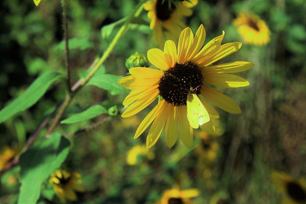Look like flower.JPG