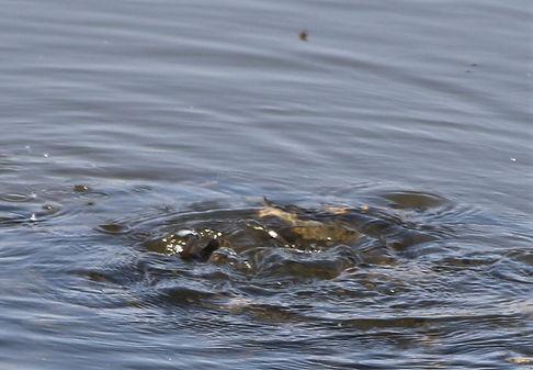 FISH-TURTLE (2).JPG