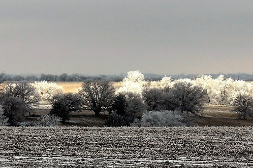 """FROSTY MORNING""-16"" X 20"" PHOTOGRAPH ON CANVAS, GALLERY WRAPPED"