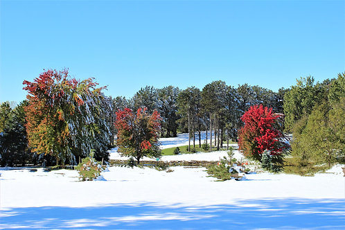 """""""FIRST SNOW""""-16"""" X 20"""" PHOTOGRAPH ON CANVAS, GALLERY WRAPPED"""