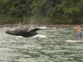 Nuquí, una joya perdida en la costa de Chocó.