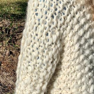 Detalhe Uma Ovelha
