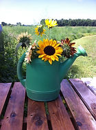 Sunflowers available at Needham's Market Garden.