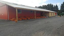 Needham's Market Garden showing off their pumpkins in the fall.
