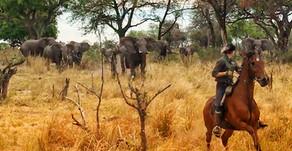 Managing a horse riding safari in Botswana - as you do