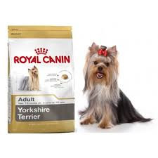 YORKY ROYAL CANIN