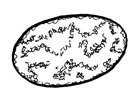 Ureaplasma urealyticum