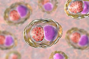 mycoplasma-hominis.png