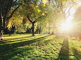 tree trimming in orleans.jpg