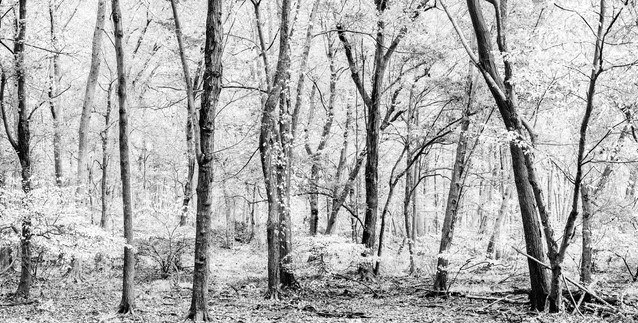 Mono_Trees-3.jpg