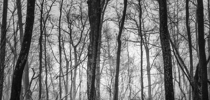 Mono_Trees-9.jpg