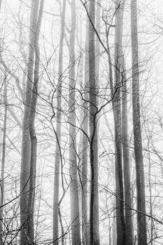 Mono_Trees-10.jpg