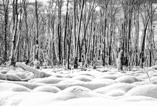 Mono_Trees-4.jpg