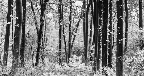 Mono_Trees-2.jpg