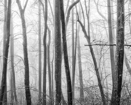 Mono_Trees-7.jpg