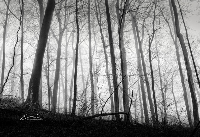Mono_Trees-6.jpg