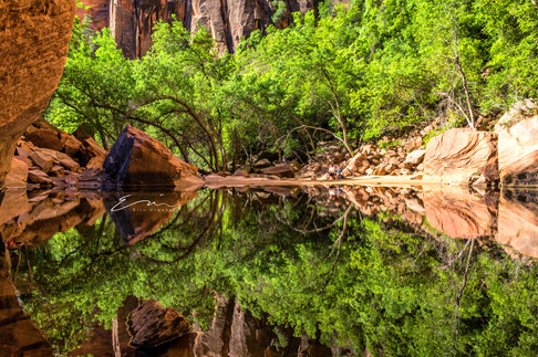 Collection_Reflection-5.jpg