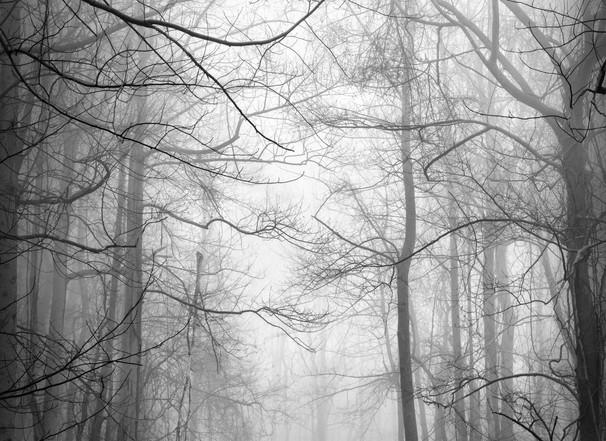 Mono_Trees-5.jpg