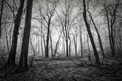 Mono_Trees-8.jpg
