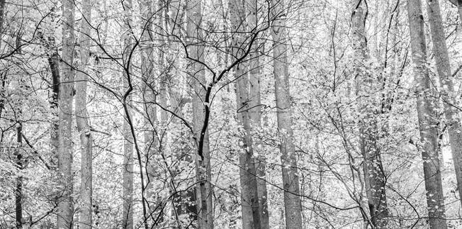 Mono_Trees-1.jpg