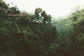 las główna