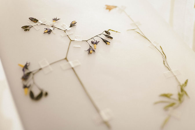 Canva - Dried Flowers .jpg