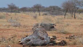 Anthropocene: The 6th Mass Extinction Event