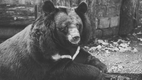 The Torture of Asia's Bears