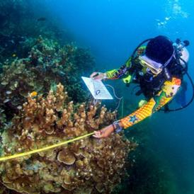 Alvin Chelliah, Reef Check Malaysia