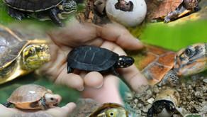 Vietnam: Turtle Conservation Centre