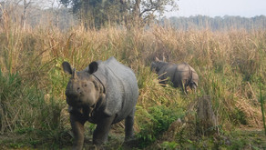 Chitwan Adventure: Birds, Rhinos And A Tiger In Our Pants