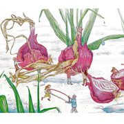 onions web.jpg