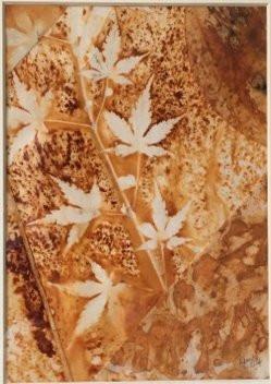 Maple Leaves Resisting Change