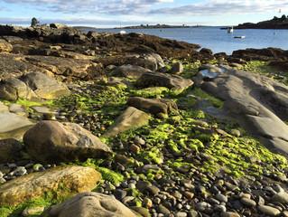 Art on the coast of Maine
