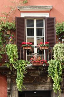 Window and Vine, Rome