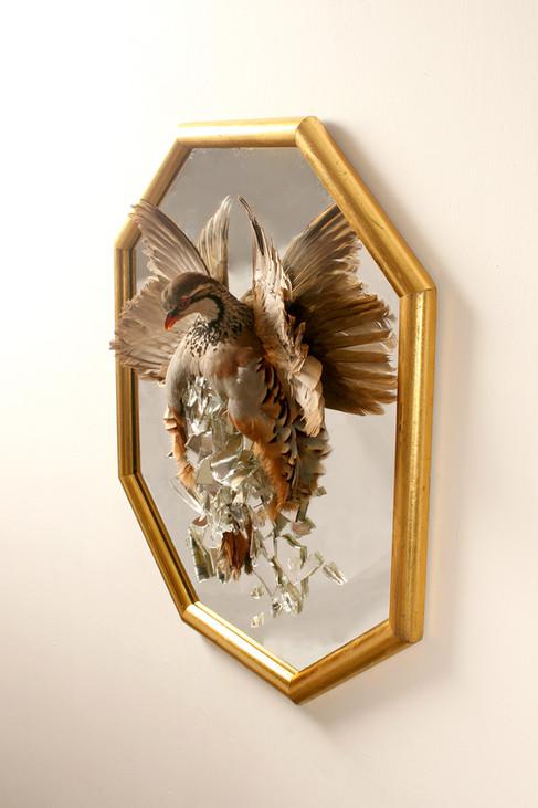 Red Legged Partridge. Art Work. Taxidermy bird.
