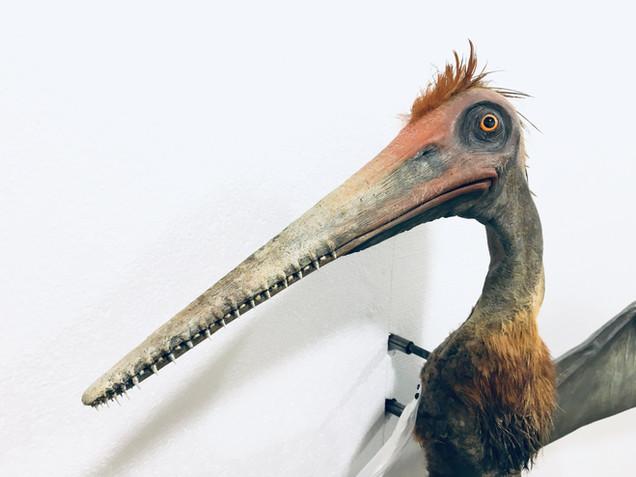 Pterodactyl - Prague Natural History Museum