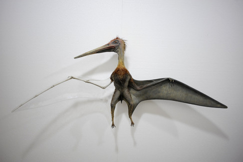 Pterodactyl - Prague Natural History Museum