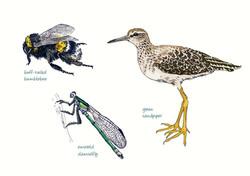 Interpretation panel illustrations