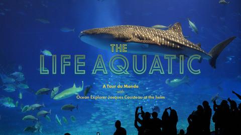 Life Aquatic Opener D