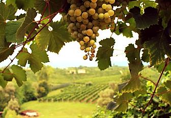 veneto prosecco wine tasting